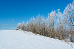 Winter landscape. frozen trees. Royalty Free Stock Photos