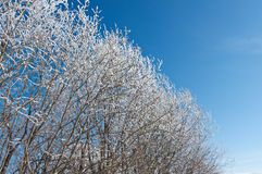 Winter landscape. frozen trees. Royalty Free Stock Photography