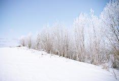 Winter landscape. frozen trees. Stock Images
