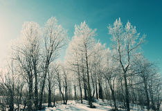 Winter landscape. frozen trees. Royalty Free Stock Image