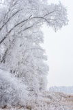 Winter landscape, frozen trees. Covered with white hoarfrost Stock Images