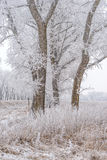Winter landscape, frozen trees. Covered with white hoarfrost Stock Photo