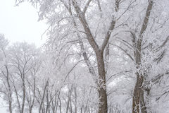 Winter landscape, frozen trees. Covered with white hoarfrost Stock Photos