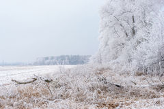 Winter landscape, frozen trees. Covered with white hoarfrost Royalty Free Stock Photos