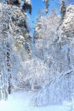 Winter landscape with frozen trees Royalty Free Stock Image