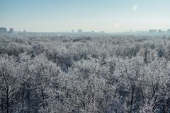 Winter landscape. Frozen trees in a forest covered by snow and hoarfrost on modern houses background near the city of Voronezh Stock Photography