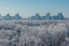Winter landscape. Frozen trees in a forest covered by snow and hoarfrost on modern houses background near the city of Voronezh Stock Photo