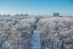 Winter landscape. Frozen trees in a forest covered by snow and hoarfrost on modern houses background near the city of  Voronezh Royalty Free Stock Image