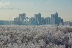 Winter landscape. Frozen trees in a forest covered by snow and hoarfrost on modern houses background near the city of Voronezh Royalty Free Stock Photo