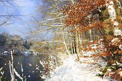 Winter landscape of frozen trees and lake. Royalty Free Stock Photography
