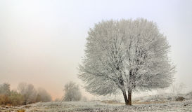 Winter landscape of frozen trees Stock Photos