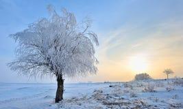 Winter landscape of frozen trees Royalty Free Stock Photo