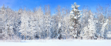 Winter landscape with frozen trees royalty free stock photos