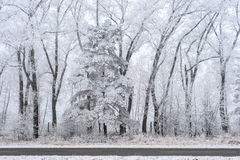 Winter landscape, frozen trees. Beside the road covered with white hoarfrost Stock Photography