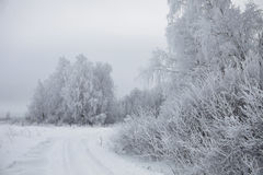 Winter landscape. Frozen trees Royalty Free Stock Photography
