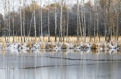 Winter landscape with frozen water and birch trees Stock Photos