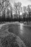Frozen water in a forest. Winter landscape with frozen water in a forest stock photos
