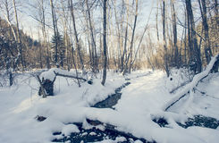 Winter landscape and frozen water. Winter landscape, frozen water and trees royalty free stock images
