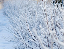 Winter landscape. Stock Photos