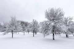 Winter landscape with fruit trees. Royalty Free Stock Photography