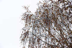 Winter landscape in gloomy day with birch branches blurred in th Stock Photography