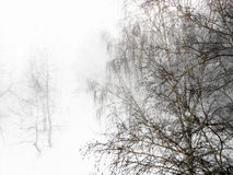 Winter landscape in gloomy snowfall day.  Photo manipulation Stock Photography