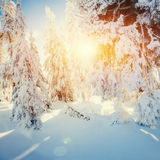 Winter landscape glowing by sunlight. Dramatic wintry scene. Car Royalty Free Stock Photos