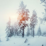 Winter landscape glowing by sunlight. Dramatic wintry scene. Car Royalty Free Stock Photography