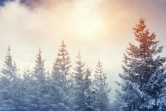 Winter landscape glowing by sunlight. Dramatic wintry scene. Car Royalty Free Stock Image