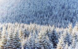 Winter landscape glowing by sunlight. Dramatic wintry scene. Car Royalty Free Stock Photo
