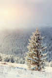 Winter landscape glowing by sunlight. Dramatic wintry scene. Car Stock Image