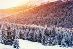 Winter landscape glowing by sunlight. Dramatic wintry scene. Car Royalty Free Stock Images