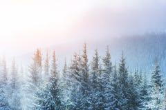 Winter landscape glowing by sunlight. Dramatic wintry scene. Car Stock Photos