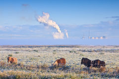 Winter landscape of grassland with horses Royalty Free Stock Photos