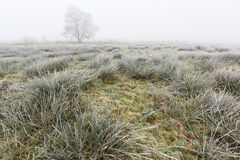 Winter landscape of grassland on misty morning Stock Image