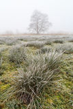 Winter landscape of grassland on misty morning Royalty Free Stock Images