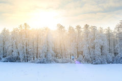 Winter landscape with green fir trees covered with snow and wint Royalty Free Stock Photos