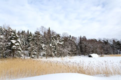 Winter Landscape. Stock Images