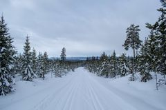 Winter landscape in Hedmark county Norway.  Winter wonderland, snow covered trees and a lot of snow on the ground. Winter landscape hedmark county norway royalty free stock photos
