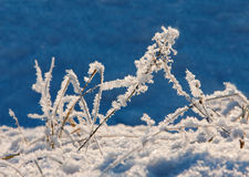 Winter landscape with herbs Stock Photography