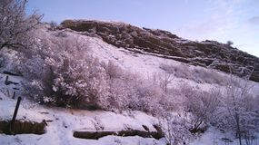 Winter landscape on the hillside trees. royalty free stock photography