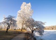 Winter landscape. Stock Image