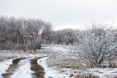 Winter landscape with hoarfrost on trees Royalty Free Stock Photography