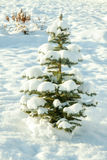 Winter landscape with holiday new year and Christmas fir tree Stock Photo