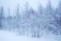 Winter landscape / horizontal / snow forest Royalty Free Stock Photos
