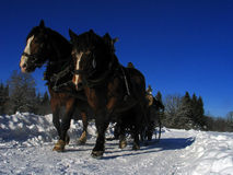 Winter Landscape with Horse-Drawn Sleigh Stock Photo