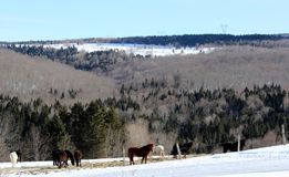 Winter Landscape. With horses in the foreground in the Eastern Townships, Quebec royalty free stock photo