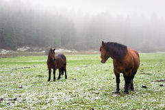 Winter landscape with horses Royalty Free Stock Image