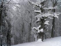 Winter landscape I Royalty Free Stock Photos