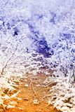 Winter landscape with snow Stock Photo